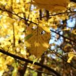 Есен. Просто есен.