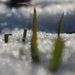 Освобождаване от снега