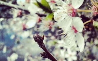 Kогато е пролет, и пролет, и пролет...