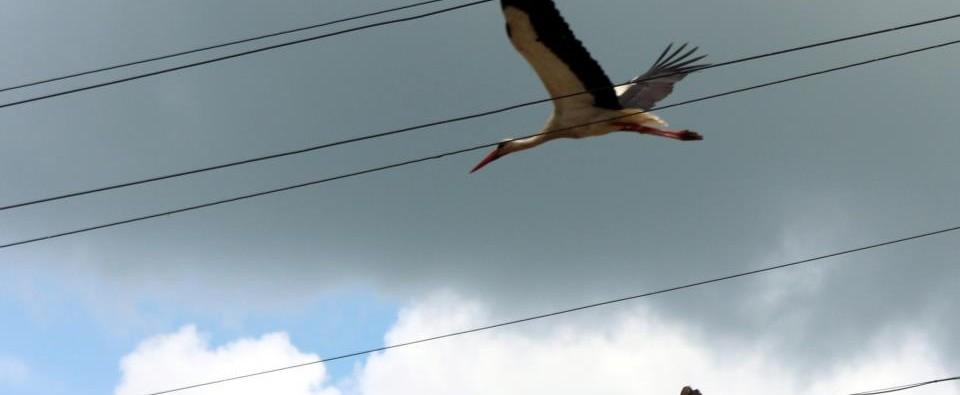 А някога да ви се е приисквало да летите над жиците?  Опитайте тази сутрин. В съня на утрото. В будното състояние на утрото. Просто нагоре. Сега.
