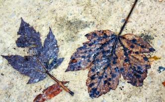 Остатъци от есен.  Какво остави есента в теб? Остави ли ти плод, с който да изкараш зимата? Остави ли ти цвят, който да изтрае до следващата пролет? Или само остатъци? Остатъци от есен.  Любомир Розенщайн http://www.facebook.com/changewire.info