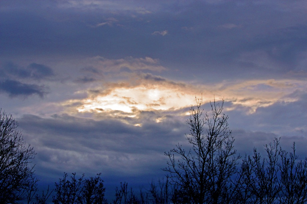 Почти тъмни са вечерите на ноември: голите клони, украсени със гарвани.