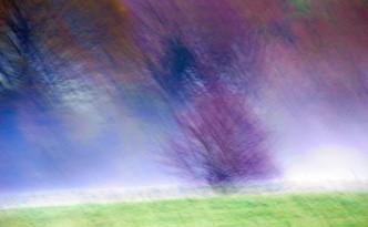 Опитвам се да пререждам и търся думи, а вместо думи паметта ми събужда картини... Белите цветове на трънките и глога в живите огради между пролетните поляни... Някогашните планински нивици отдавна са се превърнали в покрити с иглика ливади, а храстите, които са ги разграничавали, стоят... Събираме тези бели цветчета за чай, който става  като пролетната утрин, прозрачен и изпълнен с цветно ухание...