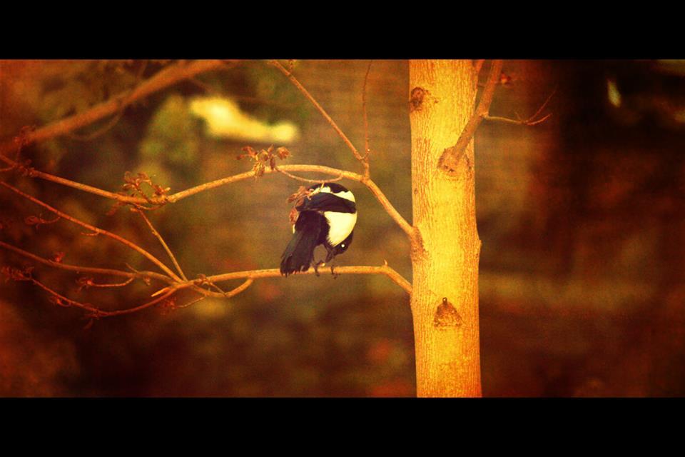 Ние си мислим, че когато денят започва, вече сме го подредили. Но самата истина е, че никой от нас няма никаква представя какво ще му донесат следващите часове... Накъде ще го отведе пътят, след като затвори външната врата... и дали ще я отвори пак въобще... дали и в края на този ден ще има завръщане... Докато още спим, може би птиците обмислят това..