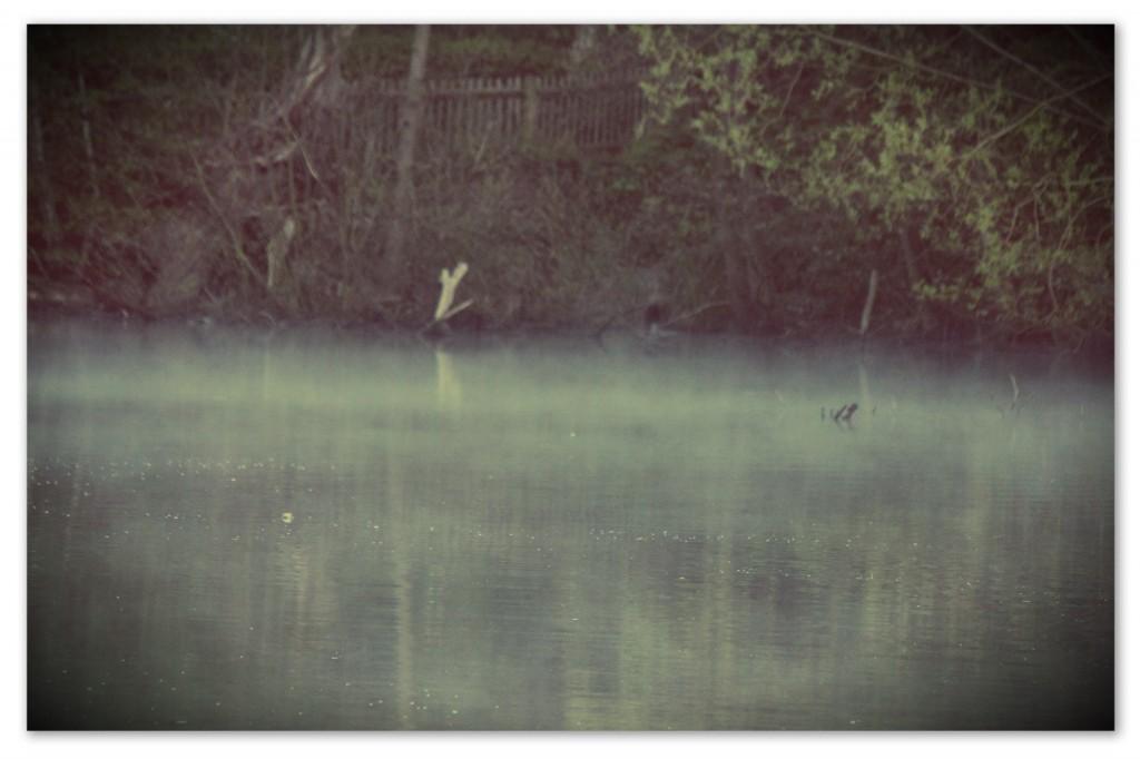 Опитвам по всякакъв начин да задържа в кадър леките изпарения, които се надигат над езерото при зазоряване. Все не успявам. Пробвам различни настройки на техниката, въртя се около брега, приклякам, снимам, снимам, но нищо от кадрите не се приближава по никакъв начин до онова, което искам да се види на снимката. Събуждането на езерото. Тихото раздвижване на водата, която се готви да посрещне слънцето. Лъчите светлина са още високо над водната повърхност, езерото остава в сумрак, но като че ли с кожата си започва да усеща пристигането на изгрева и намира начин да му отговори, да го приветства, да започне да се разтваря и да се слива със слънцето на утрото... Сякаш езерото се опитва да се изкачи към небето в този миг, да се изтегли  нагоре, д а се издигне, само да стигне по-близо, по-скоро до светлината... И там, на границата, малко над водата и под небето, само в кратките минути при зазоряване, се разстила едно второ, ефирно езеро, почти водно, почти въздушно, съвсем невидимо за обектива ми, толкова вълшебно... Прибирам фотоапарата и просто сядам на мократа трева. Може да е видение това излизане на езерото от нощта, това тихо обяснение в нетърпелива любов към слънцето... В тези мигове разбирам приказките за русалки и феи, за горски духове и за живот отвъд онзи, който сме свикнали да документираме. В тези мигове си припомням, че в живота има събития-видения, които няма как да бъдат документирани. И които няма смисъл да се опитваме да задържим, да съхраним, да приковем на стената на спомените. Те просто ще отлетят с цялата лекота на мига на границата... Ще оставят само един полъх в нас... Една глътка зазоряване - за да започнем отново да дишаме.