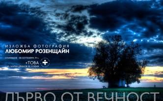 """""""Дърво от вечност"""" е фотоесе за вековна липа, подслонила при корените си малък параклис. Любомир Розенщайн снима в продължение на няколко години това дърво сутрин и представя сега в мястото за събития, срещи и изложби +това на ул. """"Марин Дринов"""" 30 в София малка част от събраните над хиляда фотографии. Част от тях са направени с камера, а друга - с мобилен телефон и са публикувани на авторските му страници в социалните мрежи."""